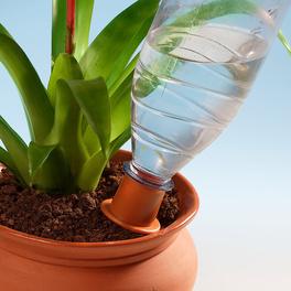 Bewässerungs-Spikes, 6er-Set
