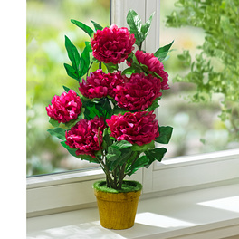 Blütenpflanze