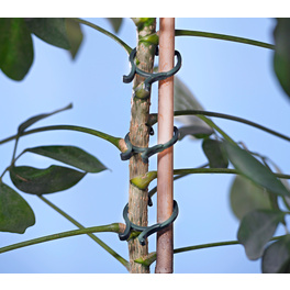 Pflanzen-Clips, 24er-Set