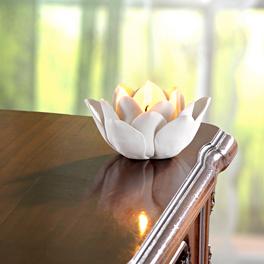 Teelichtblüte