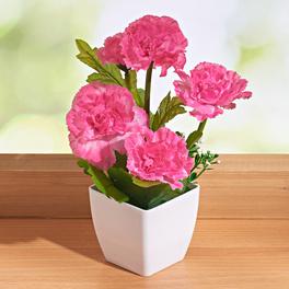 Topfpflanze rosé