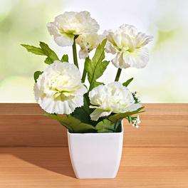 Topfpflanze weiß