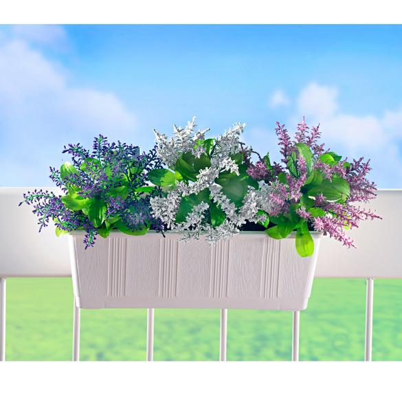 """Balkonkasten-Füllung """"Lavendel"""", 3er Set"""