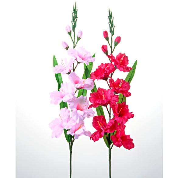 Gladiolen, 2er-Set