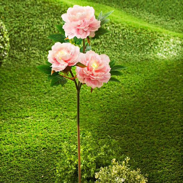 Solar-Pfingstrosen rosé, 3-tlg.
