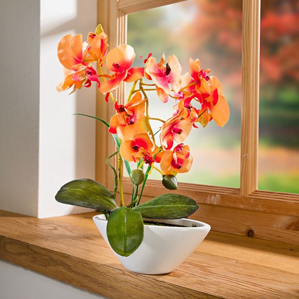 "Orchidee ""Phalaenopsis"" orange"