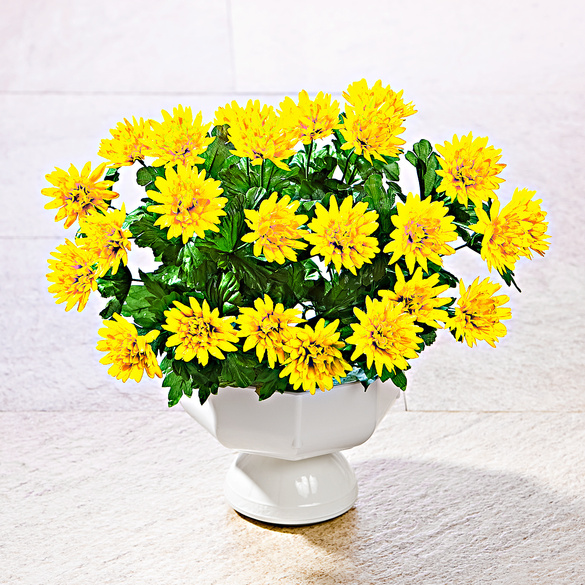 Asternbusch gelb