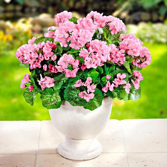 Geranien-Bouquet pink