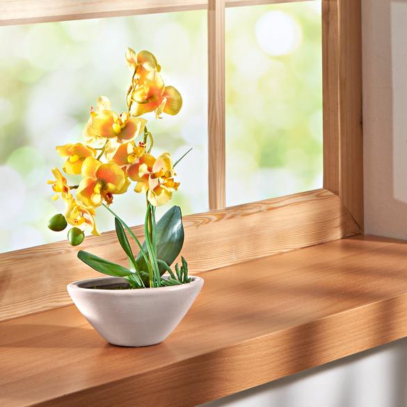 "Orchidee ""Phalaenopsis"" gelb"
