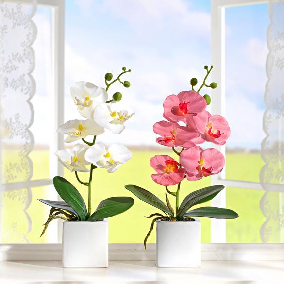 Orchideen im Topf weiß-rosa