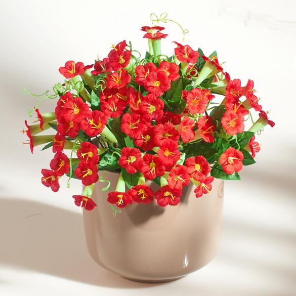 Petunien-Bouquet rot Casa Bonita