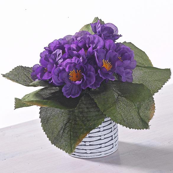 Usambara-Veilchen lila Casa Bonita