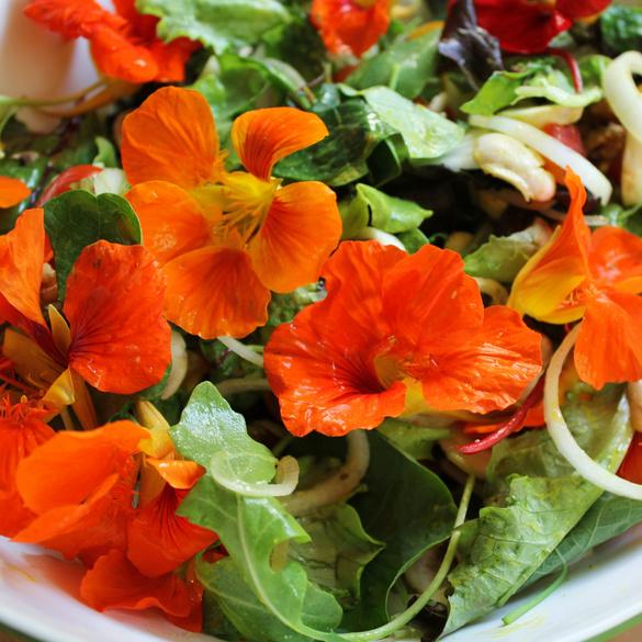 """Samenteppich """"Essbare Salatblüten"""""""