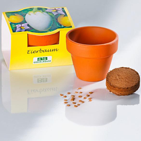 Eierbaum