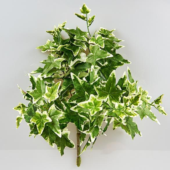 Efeubusch grün