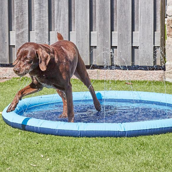 Hundepool mit Sprinkler