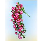 Hängeazalee rosa