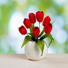 Tulpenstrauß rot