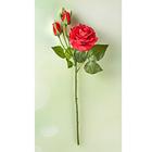 Solitär-Rose