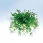 Neptun-Wunderpflanze