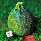 Gemüse-Garten