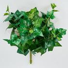Efeubusch hellgrün