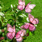 Schmetterlinge rosé 3er-Set